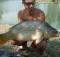 Krátka augustová rybačka