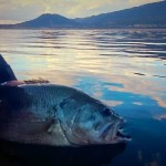 FISHING IN PARADISE 04