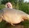 1. Milošova najväčšia ryba - lysec 24,7kg na Pop-Up Devil Krill