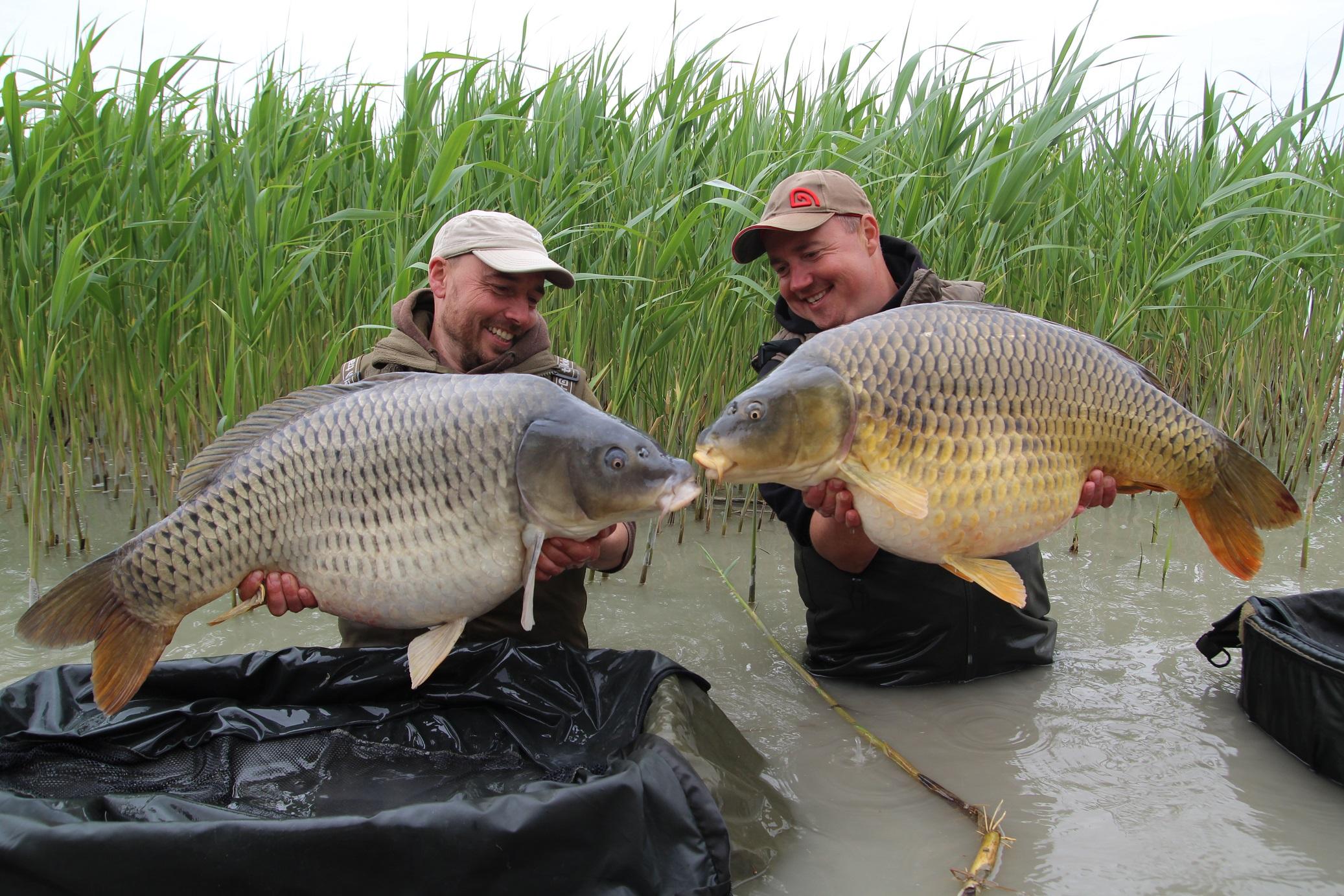 Karel a Miloš a dve ryby 18+ na Criticals Devill Krill 24mm