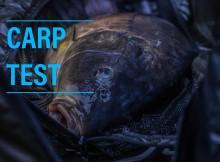 Carp Test